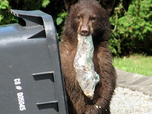 Bear with Garbage Can