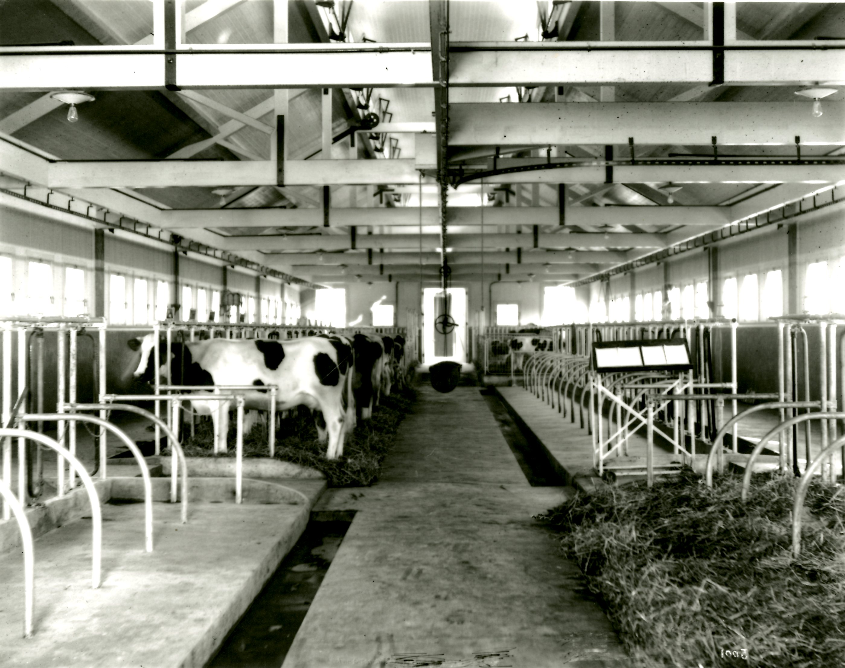 Breeding Barn Interior at Colony Farm, Circa 1912 (JPG) Opens in new window